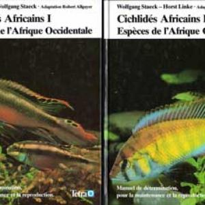 Cichlides