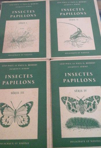 Insectespap1