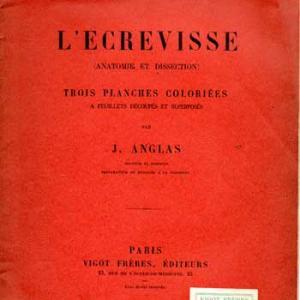 Lecrevisse1
