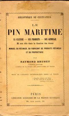 Brunet Raymond Le pin maritime  VENDU