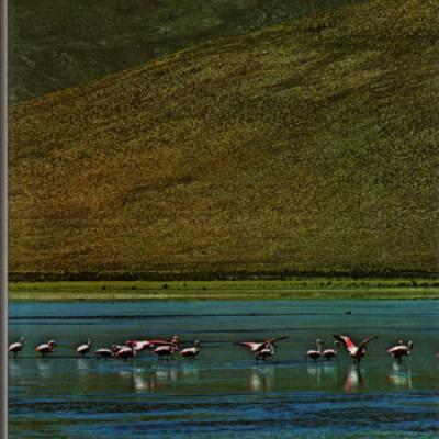 Les oiseaux dans leur milieu par Jean Dorst
