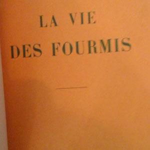 Viedesfourmis3
